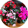 Floristería les Flors